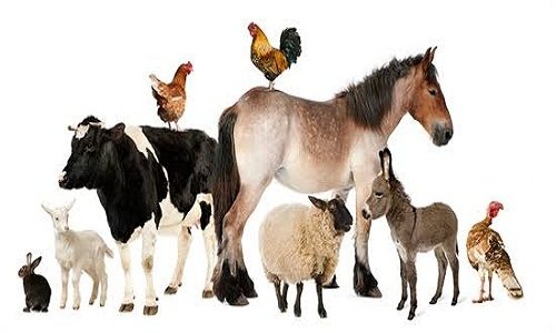 Animal Health2