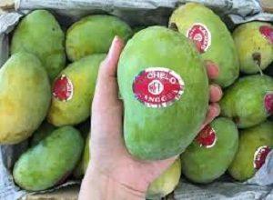Mango Cultivars Authentication2